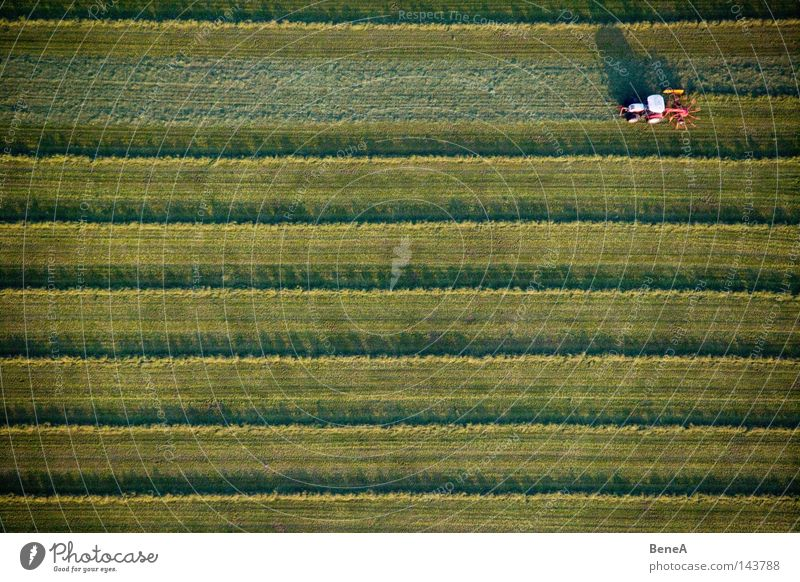 Mr. Tractor Driver Agriculture Utility vehicle Vehicle Field Meadow Green Line Symmetry Geometry Work and employment Generator Shadow Evening sun Red