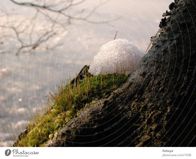 Winter Snow Spring Moss