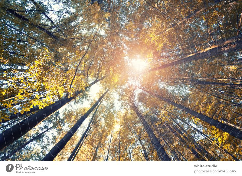 Nature Relaxation Calm Forest Autumn Exceptional Contentment Meditation Autumnal Autumnal colours Automn wood Forest death