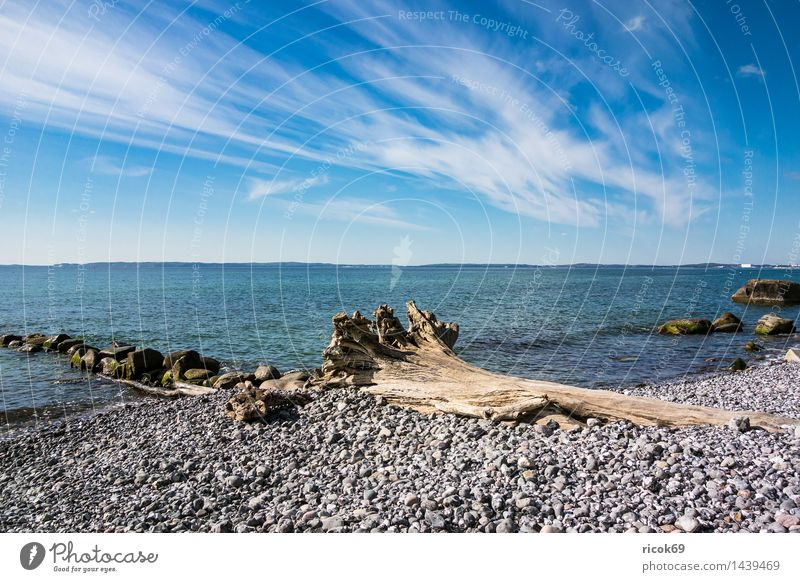 Baltic Sea coast on the island of Rügen Relaxation Vacation & Travel Nature Landscape Clouds Tree Coast Ocean Tourist Attraction Stone Blue Romance Idyll