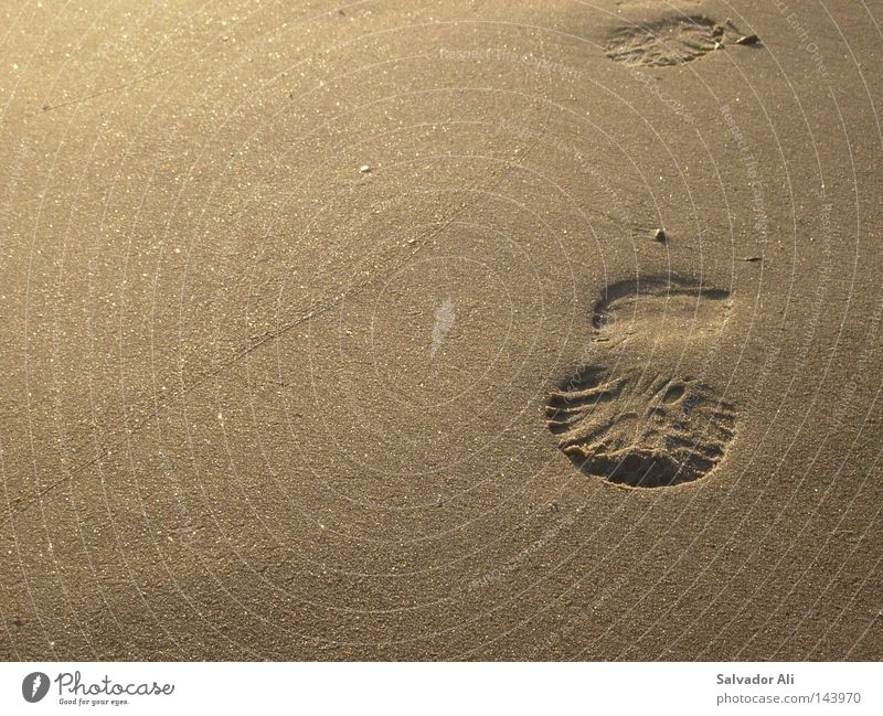 Nature Beautiful Beach Relaxation Sand Coast Brown Going Transience To go for a walk Tracks Footprint Beige Grainy
