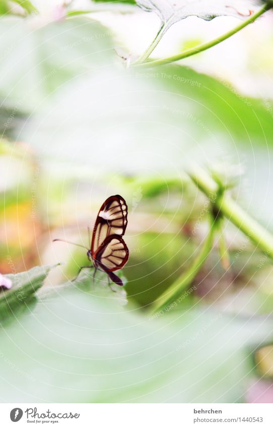 small, but fine Nature Plant Animal Spring Summer Beautiful weather Tree Leaf Garden Park Meadow Wild animal Butterfly Wing 1 Observe Relaxation Flying To feed