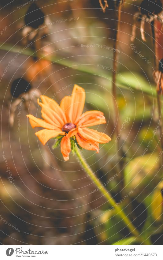 imperfection II Nature Plant Autumn Beautiful weather Flower Blossom Flowering plant Garden Faded Old Authentic Yellow Green Variable Power Transience