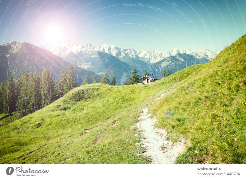 Up to the hut Joy Healthy Harmonious Contentment Relaxation Calm Vacation & Travel Tourism Trip Adventure Summer Summer vacation Mountain Hiking Environment