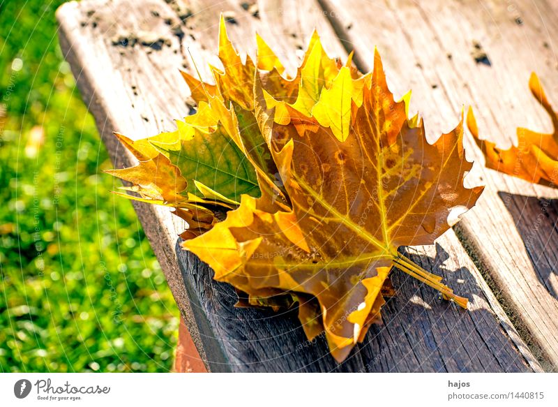 autumn leaves Nature Plant Autumn Leaf Glittering Bright Dry Yellow Pink Red discoloured colored Splendid Bench Wooden bench Park bench board Seasons Autumnal