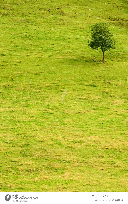 Tree Green Summer Loneliness Meadow Pasture Slope