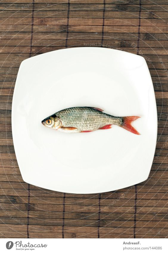 Death Natural Authentic Fresh Nutrition Fish Carp Cooking & Baking Delicious Restaurant Fishing (Angle) Feed Plate Organic produce Dinner Japan