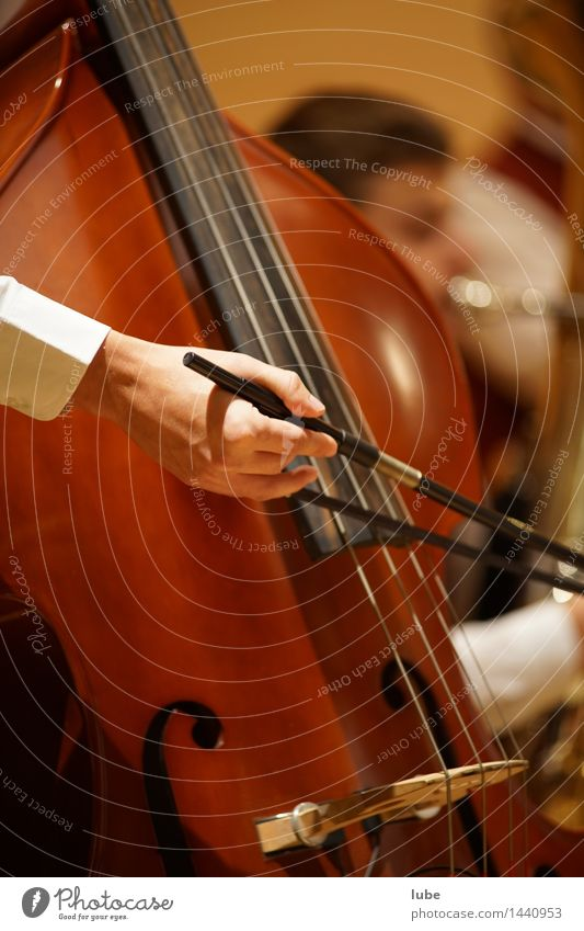 Deep tones Music Listen to music Concert Stage Musician Orchestra Painting (action, work) Electric bass Double bass String instrument Music tuition Colour photo
