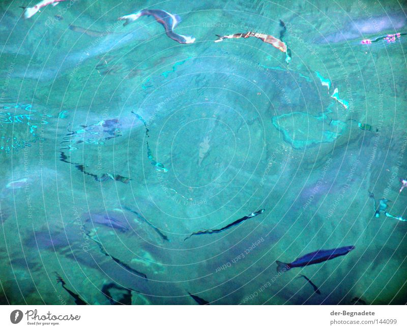 fresh fish Water Shoal of fish Fish Distorted Blue-green Waves Surface of water Unclear Blur Puzzle Abstract Diffuse Ocean