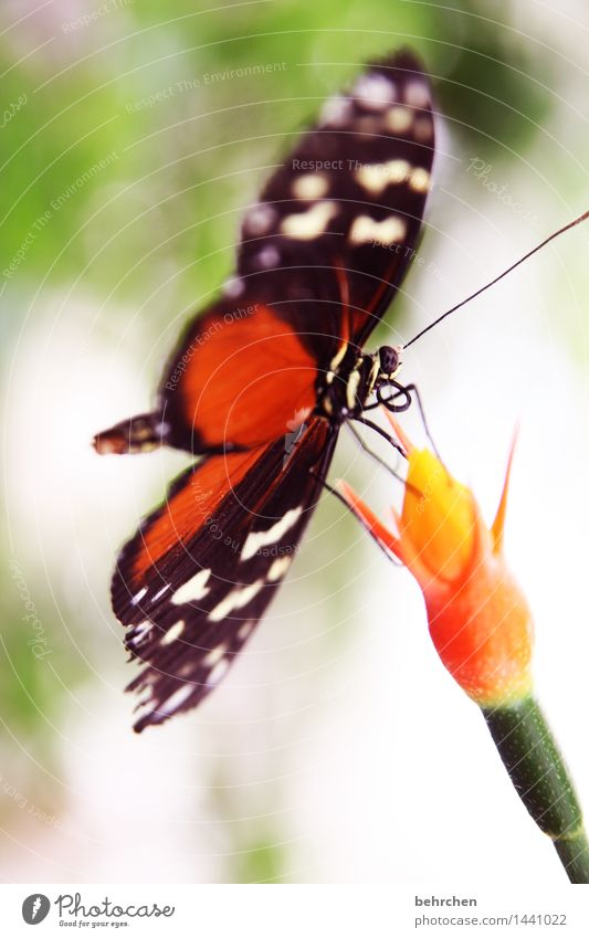 balancing act Nature Plant Animal Spring Summer Beautiful weather Flower Blossom Stalk Garden Park Meadow Wild animal Butterfly Wing Legs Feeler Trunk 1