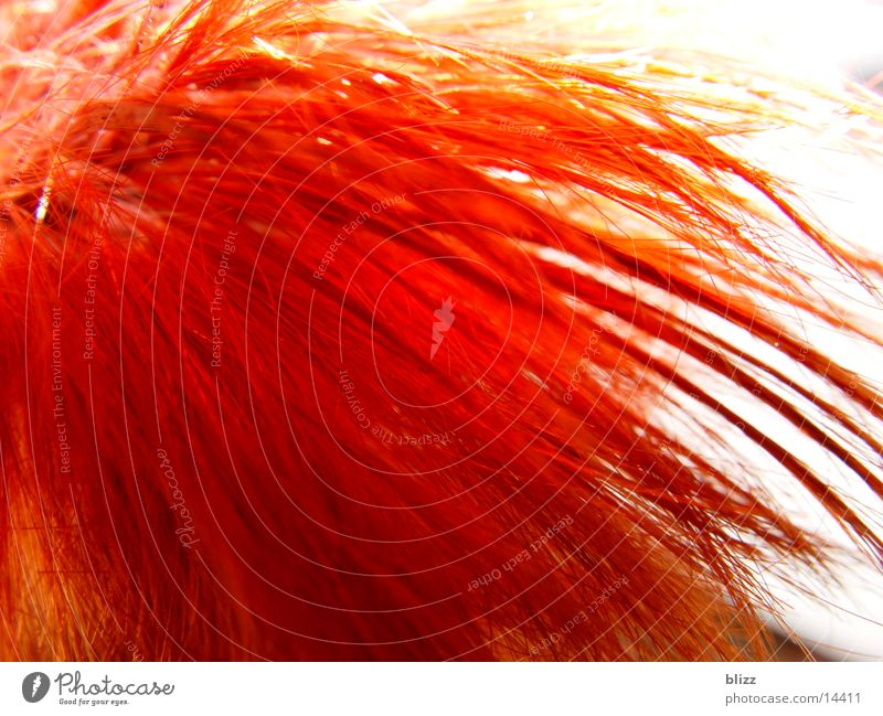 Fire red hair Red Fresh Gaudy Human being Hair and hairstyles Head Macro (Extreme close-up) Dynamics Movement dynamic colourful saturation Illuminate