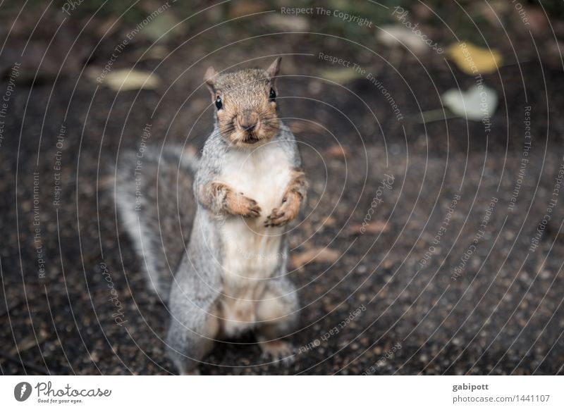 Animal Environment Brown Wild Wild animal Happiness Observe Cute Friendliness Curiosity Discover Appetite Brash London Squirrel Love of animals