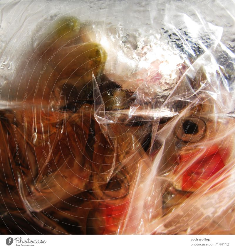fish bag Fish Sardine Fresh Nutrition Food Plastic Gastronomy Meat deep frying cooking cling film heads eyes