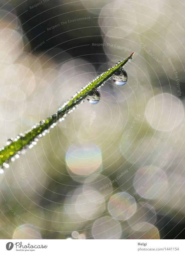 Helgiland II 1200... Nature Plant Drops of water Autumn Beautiful weather Grass Foliage plant Blade of grass Meadow Glittering Hang Illuminate Esthetic
