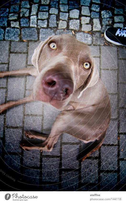 Eyes Dog Sweet Mammal Snout Alluring Animal Beg Puppydog eyes Button eyes