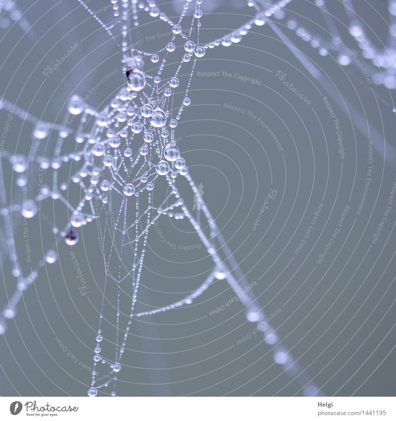 Helgiland II Pearls... Environment Nature Drops of water Autumn Fog Bog Marsh Spider's web Hang Esthetic Authentic Exceptional Uniqueness Cold Small Natural