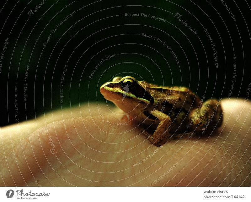 Frog in the morning WRN 08 Frogs Animal Amphibian Hand Skin Princess Jinxed Frog Prince Environmental protection Protection Animal lover Love of animals
