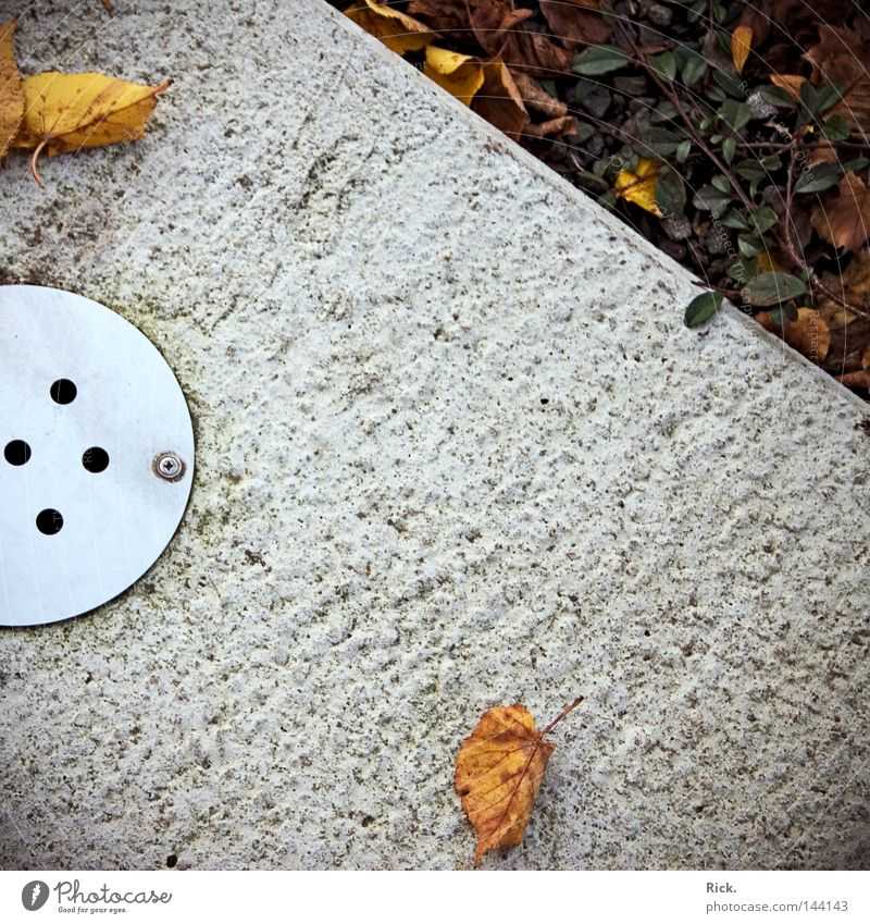 Water Plant Leaf Autumn Metal Concrete Corner Construction site Transience Steel Gully Screw Hard Tendril Sewer