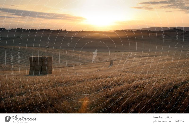 Sky Plant Yellow Grass Gold Fog Food Nutrition Ground Italy Agriculture Grain Agriculture Blade of grass Haze Wheat