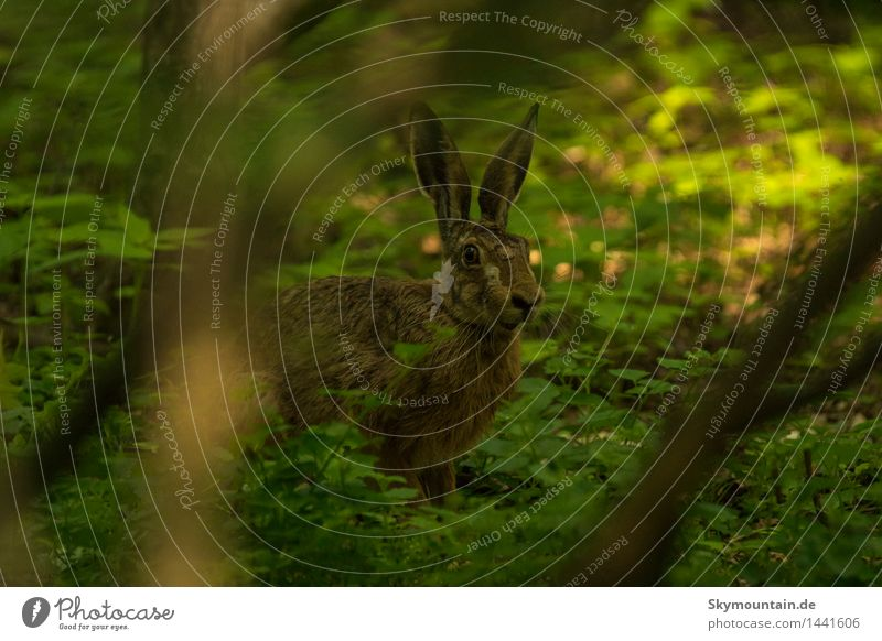 Rabbit in the dark forest Environment Nature Landscape Plant Animal Spring Summer Autumn Beautiful weather Bad weather Tree Ivy Leaf Wild plant Forest