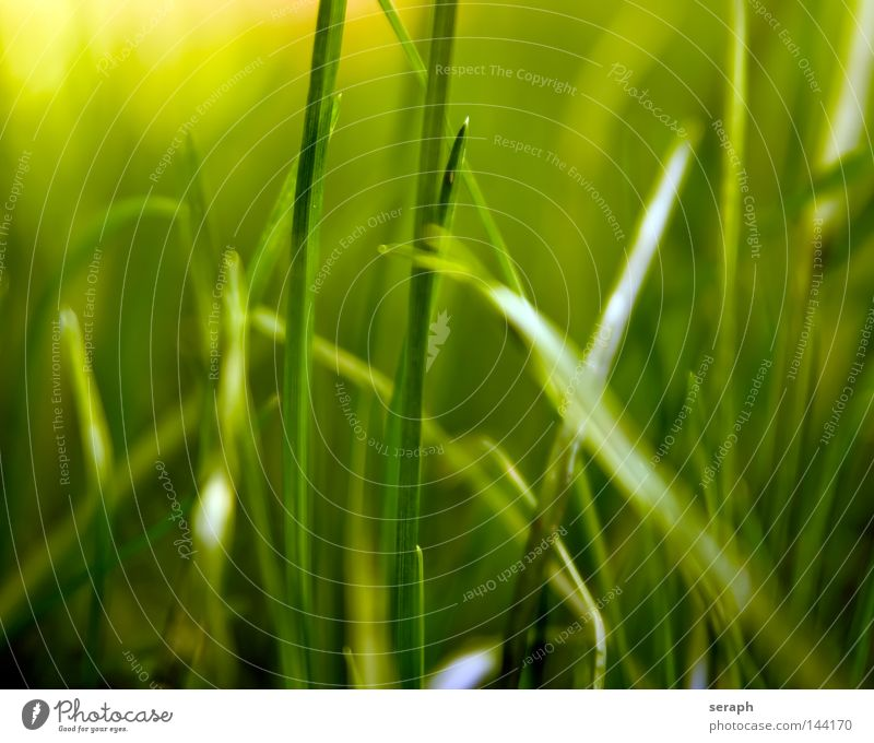 Grassland Habitat Blade of grass Muddled Ecological Biology Plant Blur Ear of corn Environment Sweet grass Bushes Stalk Soft Style Blossom Meadow Green