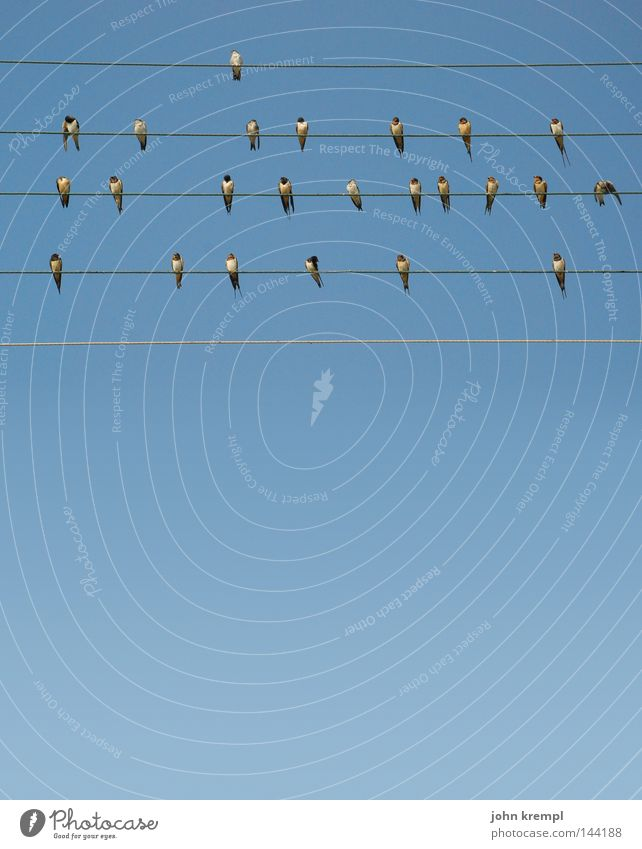 birds Bird Wire Sky Blue Musical notes Song Sing Whistle Line Geometry Nest Swallow Summer Greece stave