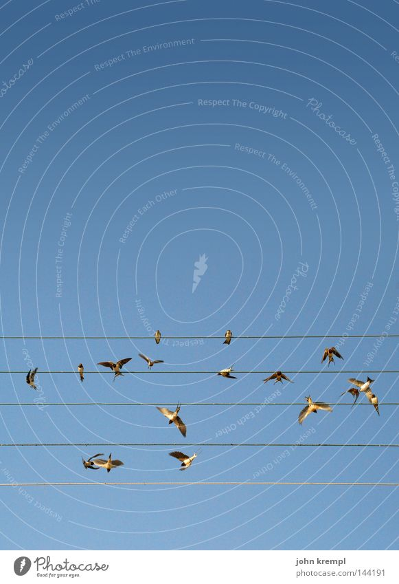 Sky Blue Summer Line Bird Flying Geometry Wire Musical notes Sing Greece Song Musician Nest Judder Swallow