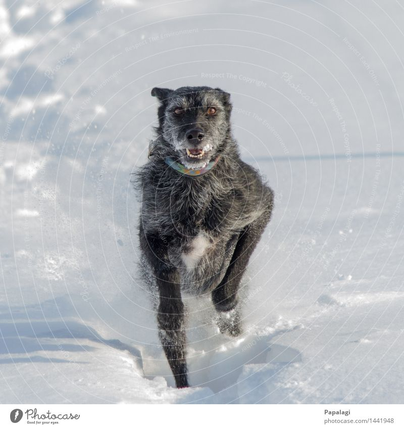 Dog Nature Beautiful Animal Joy Winter Movement Natural Snow Happy Bright Jump Power Wind Happiness Esthetic