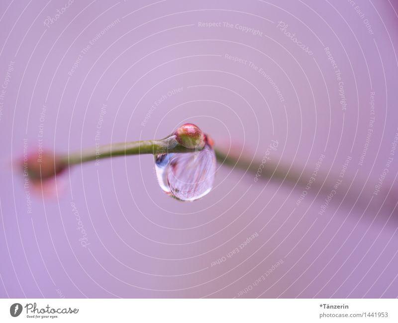 pink drops Nature Plant Elements Drops of water Autumn Winter Rain Bushes Esthetic Wet Natural Beautiful Soft Pink Attentive Calm Contentment Colour photo