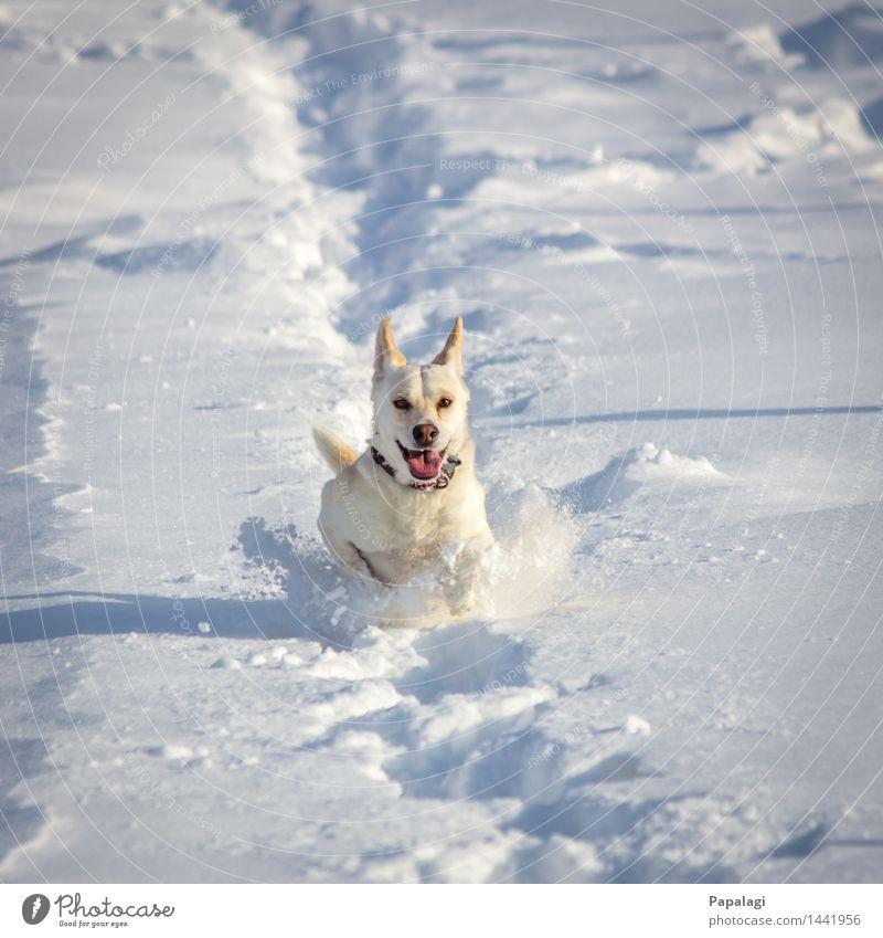 Dog Nature Beautiful Animal Joy Winter Movement Natural Snow Happy Bright Jump Wind Happiness Esthetic Walking