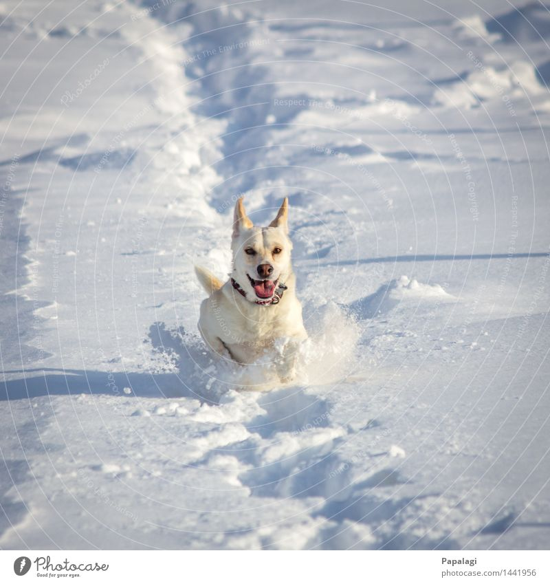 Happy Dog II Animal Pet 1 Nature Winter Snow Walking Running Jump Esthetic Natural Beautiful Athletic Joy Force Love of animals Movement Happiness Bright