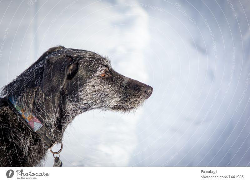 Dog Nature Old Animal Winter Sadness Snow Natural Meditative Esthetic Frost Pelt Pet Snowscape Loyalty Honest