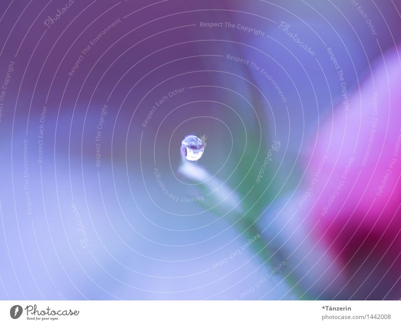 the world blurs in blue and pink Nature Plant Elements Drops of water Autumn Winter Rose Blossom Esthetic Wet Natural Beautiful Soft Attentive Serene Calm