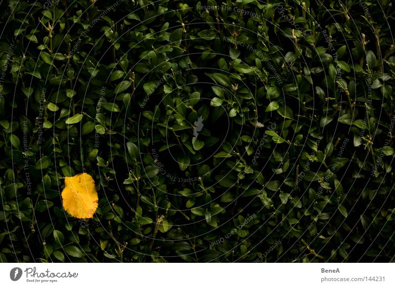 Nature Green Plant Colour Leaf Loneliness Yellow Death Wall (building) Autumn Dye Wall (barrier) Orange Corner Autumn leaves Patch