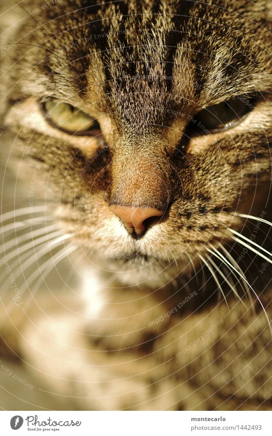 I'll be waiting. Environment Nature Animal Pet Wild animal Cat Animal face 1 Cat eyes Cat's head Observe Relaxation Lie Looking Thin Authentic Simple Near