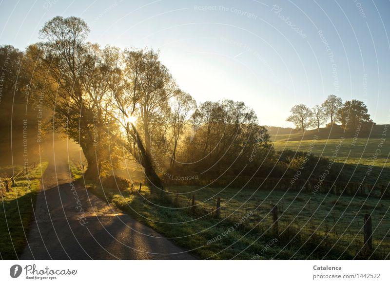 Nature Plant Blue Green Landscape Black Yellow Autumn Meadow Lanes & trails Gray Glittering Contentment Air Gold Joie de vivre (Vitality)