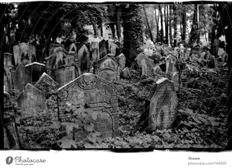 Tree Death Grief Distress Cemetery Czech Republic Grave Prague Medium format Tombstone Jewish cemetery