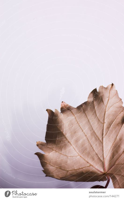 Nature White Flower Leaf Autumn Death Brown Background picture Gloomy Vine End Boredom Past Vessel Partially visible