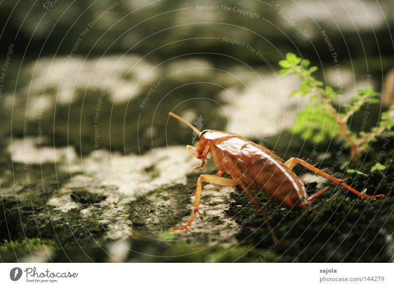 Plant Animal Relaxation Wall (building) Wall (barrier) Legs Brown Wait Break Insect Disgust Panic Feeler Armor-plated Shell
