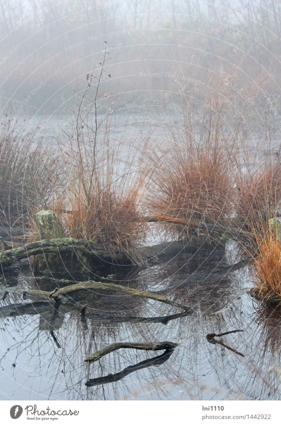 Fog in the moor Environment Nature Landscape Plant Elements Water Drops of water Autumn Weather Grass Bog witch in fog Pond Exceptional Fantastic Wet Natural