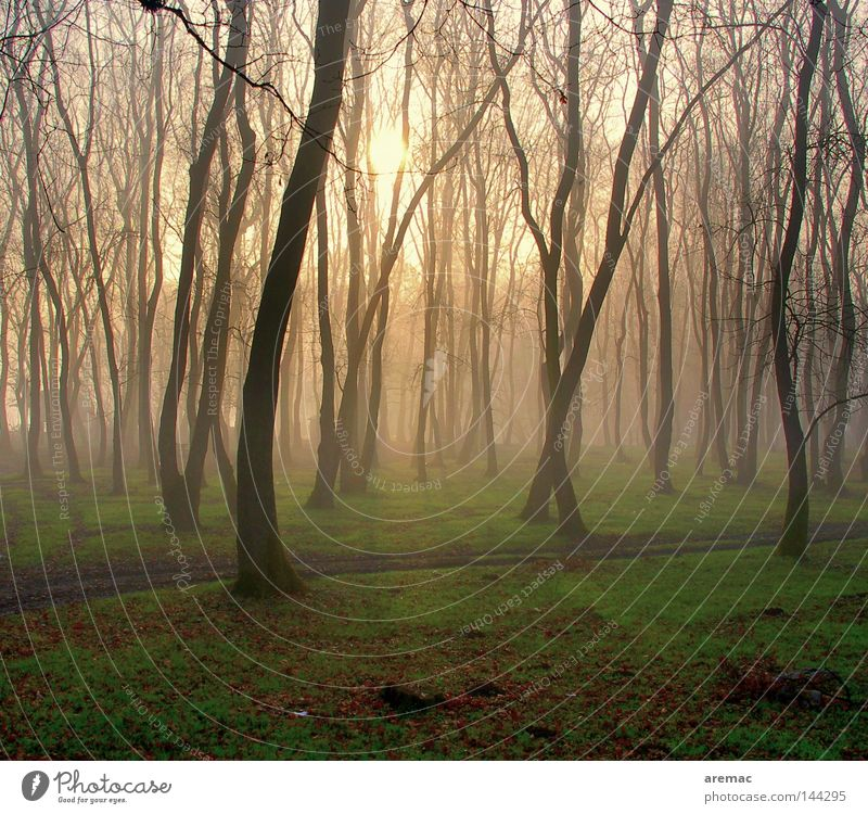 Nature Tree Sun Forest Grass Spring Landscape Moody Fog Sunrise Rich pasture forest
