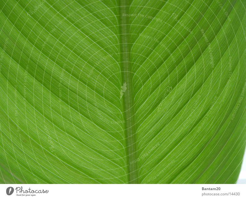 Flower Plant Leaf