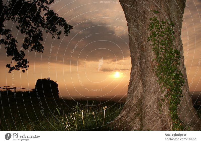 Sunset next to tree Tree Ivy Summer Clouds Mountain Rock Evening fill-in flash