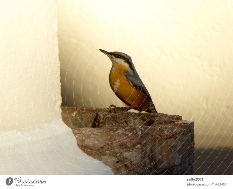consecrated birdbath... Church Wall (barrier) Wall (building) Animal Bird Eurasian nuthatch 1 Illuminate Sit Drinking Esthetic Beautiful Loneliness Contentment