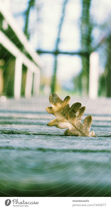 Nature Old Plant Leaf Cold Environment Autumn Natural Wood Brown Wild Air Authentic Beautiful weather Soft Dry