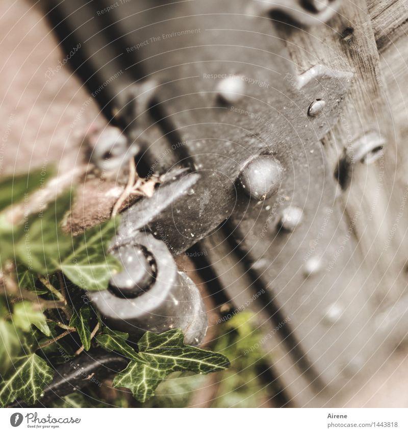 Old Plant Green Leaf Dark Gray Metal Growth Door Church Past Castle Tourist Attraction Iron Door handle Foliage plant
