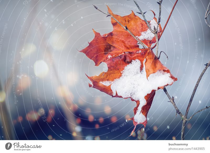 detachment Winter Nature Weather Leaf Cold Brown Yellow Gray Branch Seasons Orange Snow Snowflake flares Exterior shot Deserted Copy Space left Day Light Blur