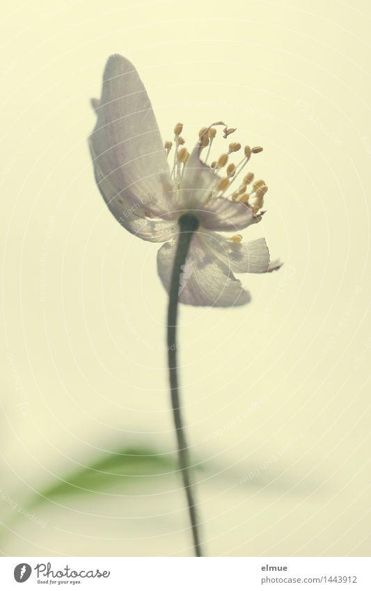 Nature Plant Naked Sun Eroticism Yellow Blossom Spring Feminine Dream Growth Power Esthetic Energy Beginning Sex