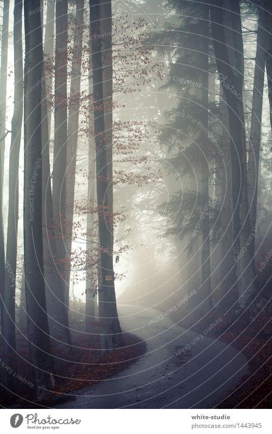 into the light Fog Dark Heaven Street Misty atmosphere Shroud of fog Risk Forest Colour photo