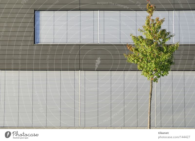 nature? Impersonal Modern Monochrome Nature Converse Aluminium Cold Smoothness Tree Green Leaf Venetian blinds Structures and shapes Gray Silver Facade Building